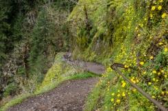 Hiking to Punchbowl Falls
