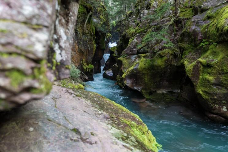 Avalnche Creek Gorge Glacier National Park