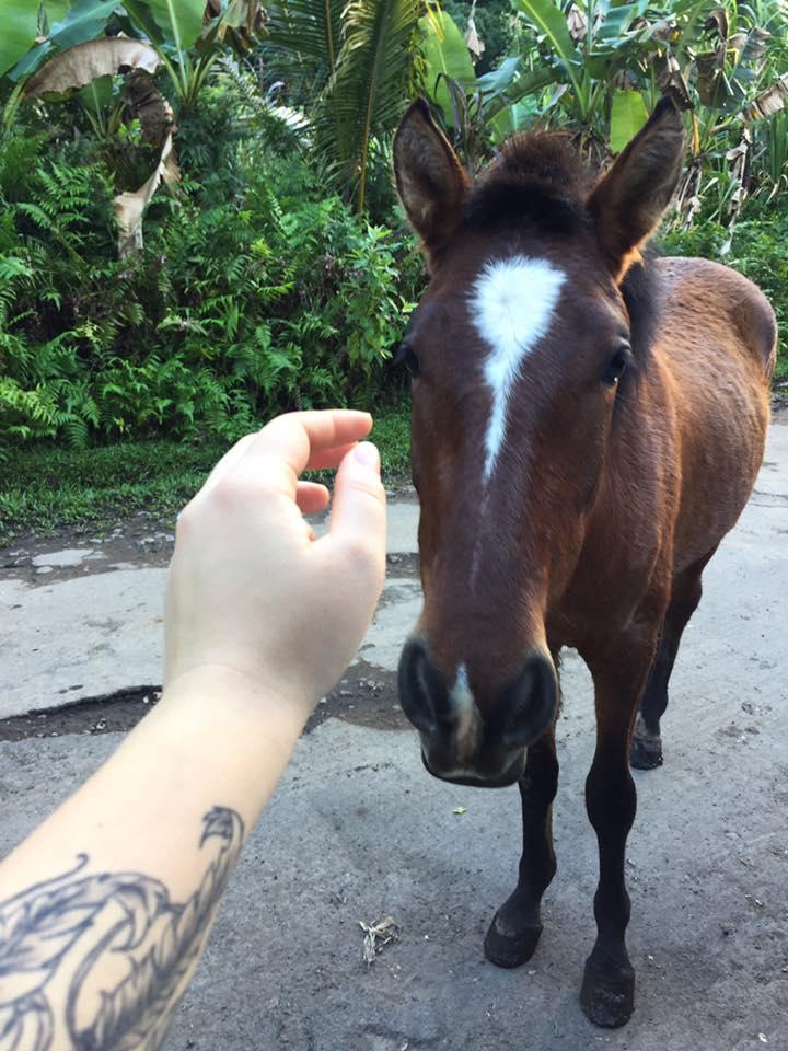 Waipio Valley Horses.jpg