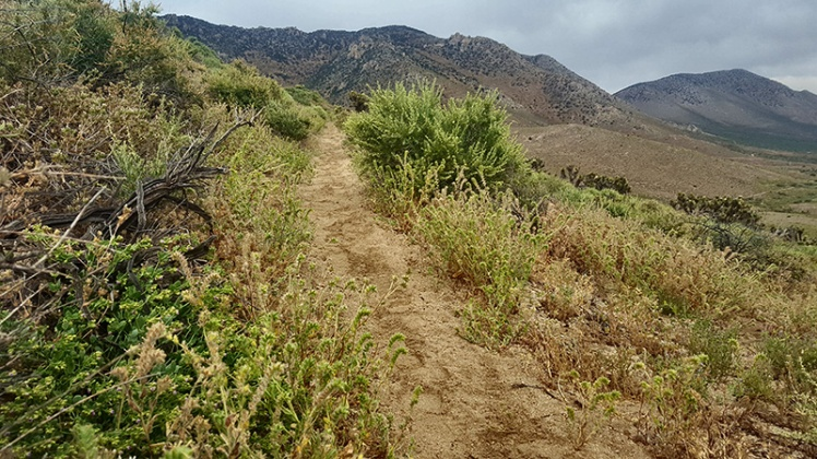 PCT Desert Section F